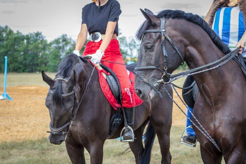 Baiser de deux chevaux arabes contre le ciel bleu Noir et rouge image libre de droits