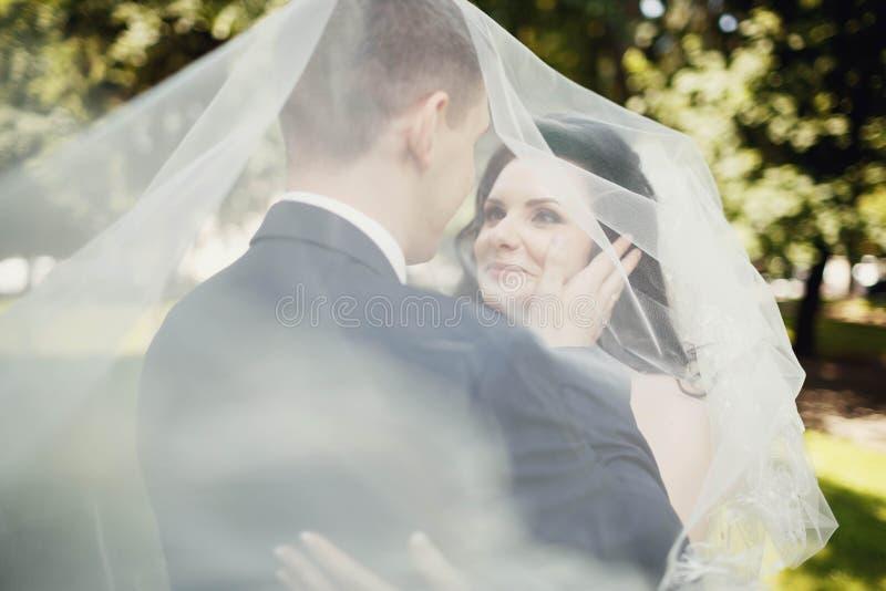 Baiser des jeunes mariés sous le voile transparent image stock