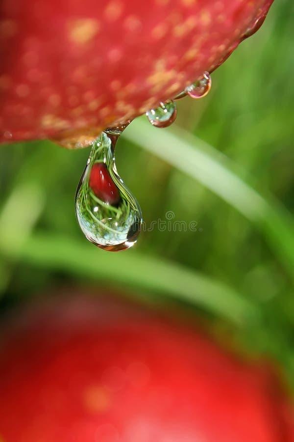 Baisse de fruit. photo libre de droits