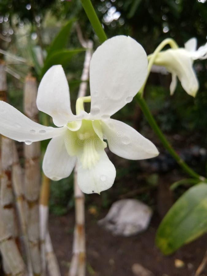 Baisse de jardin de l'eau blanche de fleur image stock