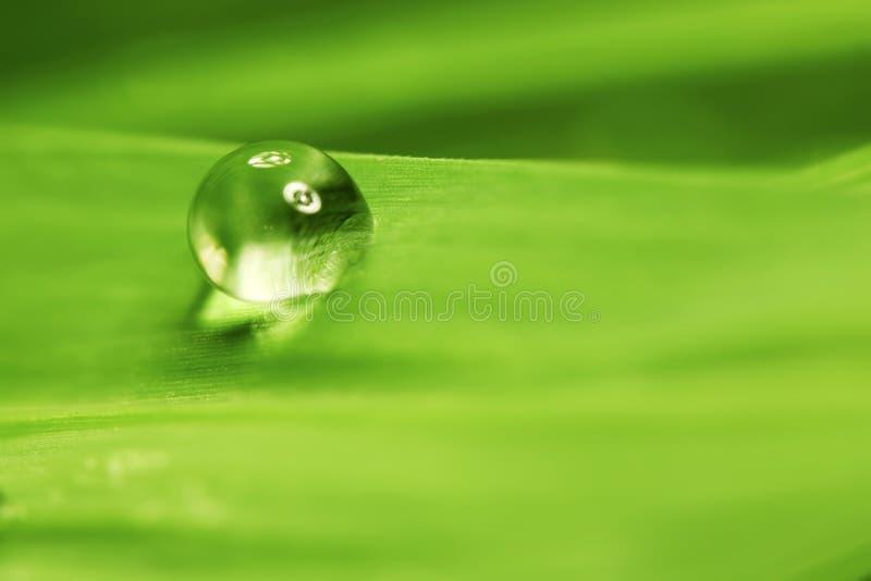 Baisse de l'eau sur la feuille photo libre de droits