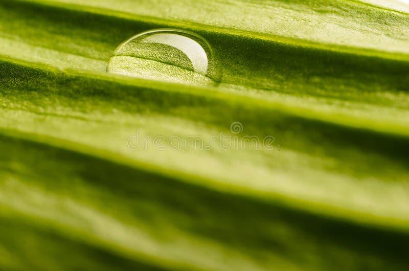 Baisse de l'eau sur la lame fraîche photos libres de droits