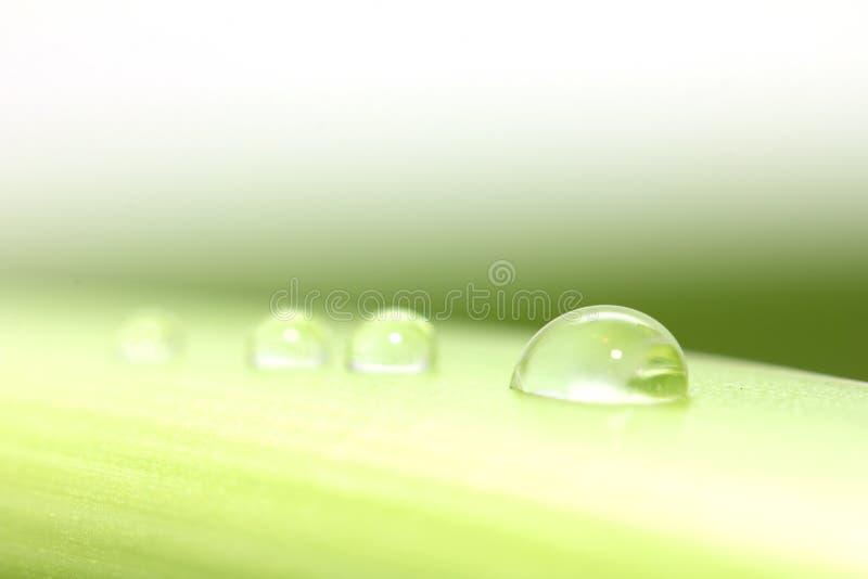Baisse de l'eau sur la lame verte Macro photographie stock libre de droits