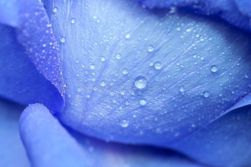 Baisse de l'eau sur les pétales bleus. images libres de droits