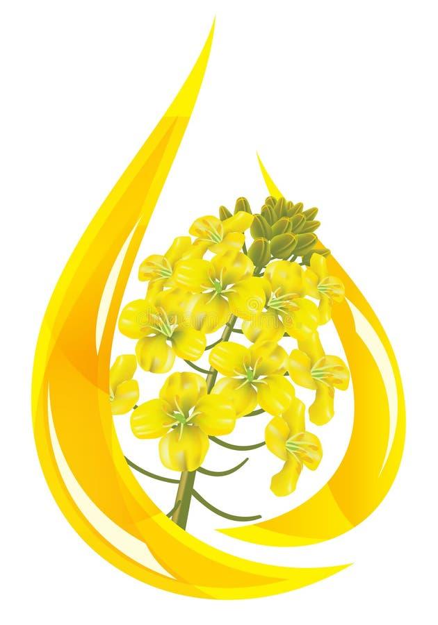 Baisse stylisée de fleur de pétrole et de graine de colza. illustration de vecteur