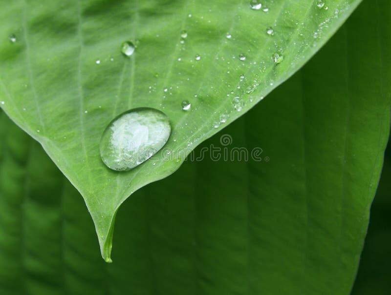 Baisse sur des extrémités foliaires image stock