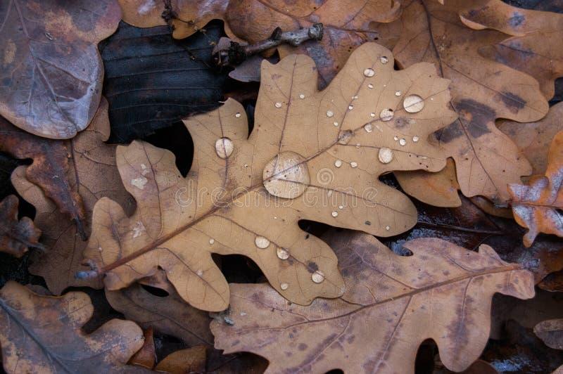 Baisses d'automne photographie stock