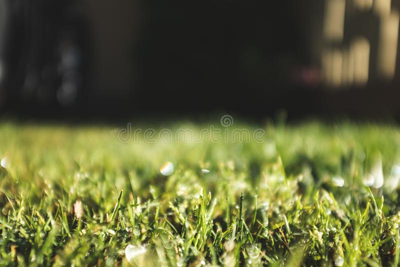 Baisses de l'eau de pluie sur un au sol d'herbe verte photographie stock libre de droits
