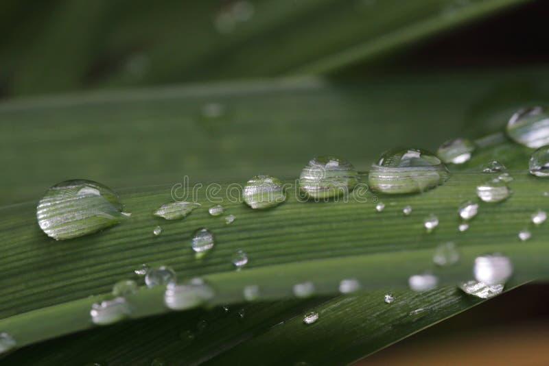 Baisses de l'eau sur l'herbe images libres de droits