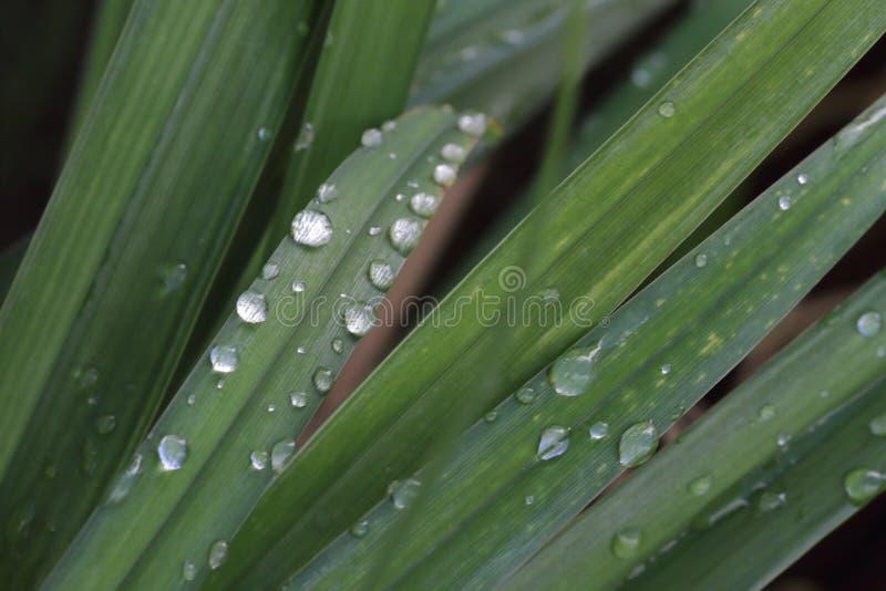 Baisses de l'eau sur l'herbe photos stock