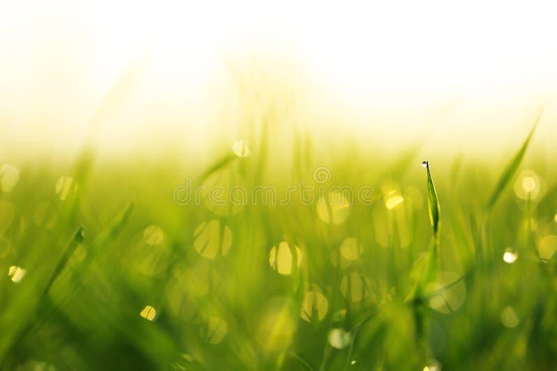 Baisses de l'eau sur la lame de l'herbe photographie stock libre de droits