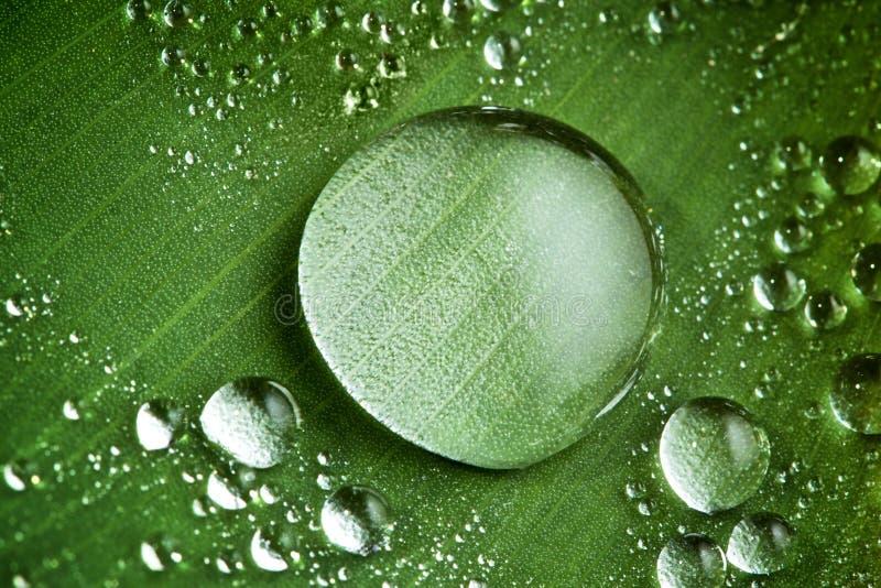 Baisses de l'eau sur la lame verte fraîche photographie stock libre de droits