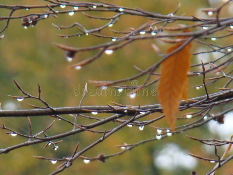 Baisses de larme d'arbre photographie stock libre de droits