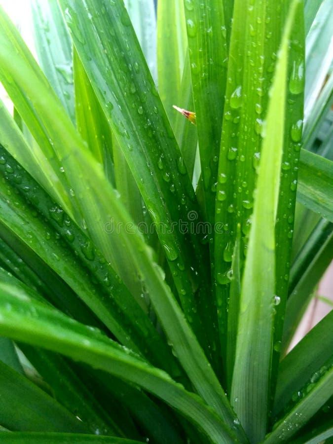 Baisses de pluie sur l'herbe verte images libres de droits