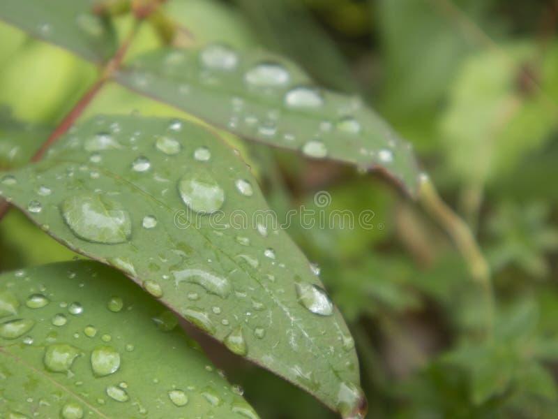 Baisses de pluie sur les lames vertes photographie stock