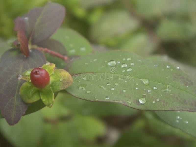 Baisses de pluie sur les lames vertes photographie stock libre de droits
