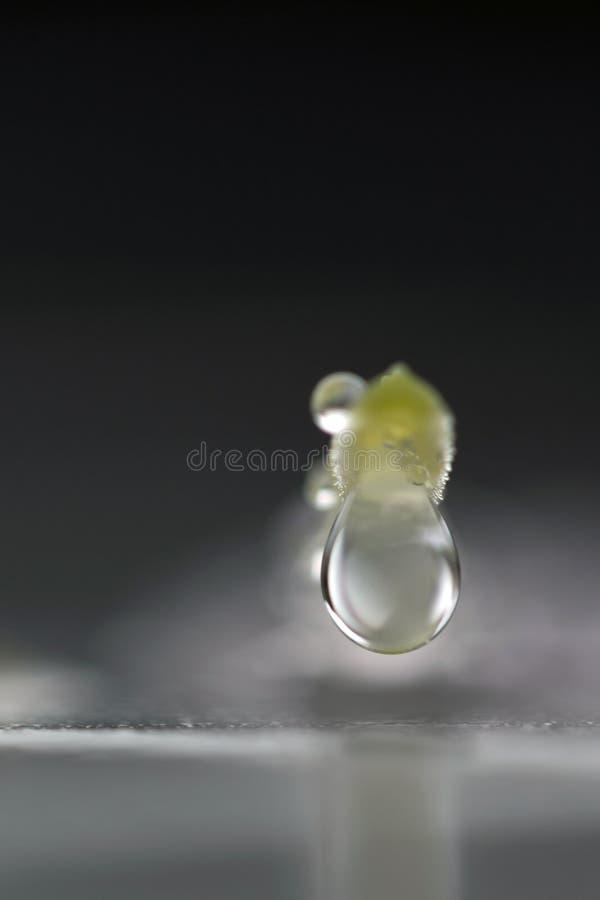 Baisses de pluie sur un pétale de fleur photo libre de droits