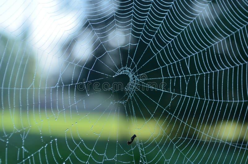 Baisses de pluie sur une toile d'araignée image stock