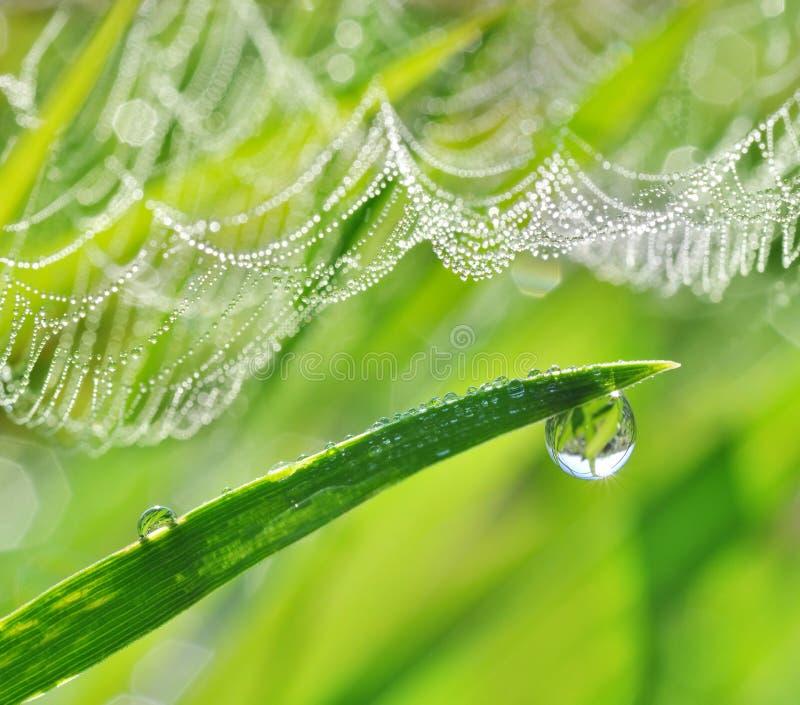 Baisses de rosée sur la toile d'herbe verte et d'araignée image libre de droits
