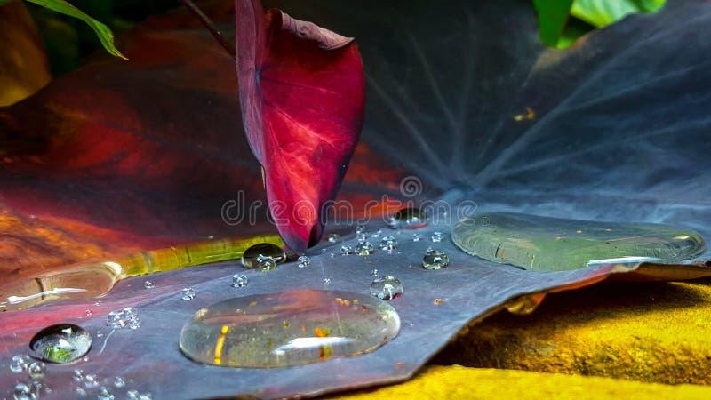 Baisses et lame de l'eau images libres de droits