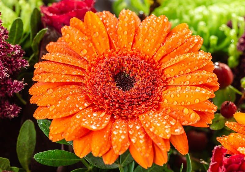 Baisses, fleurs, usines, marguerite, macro photographie image stock