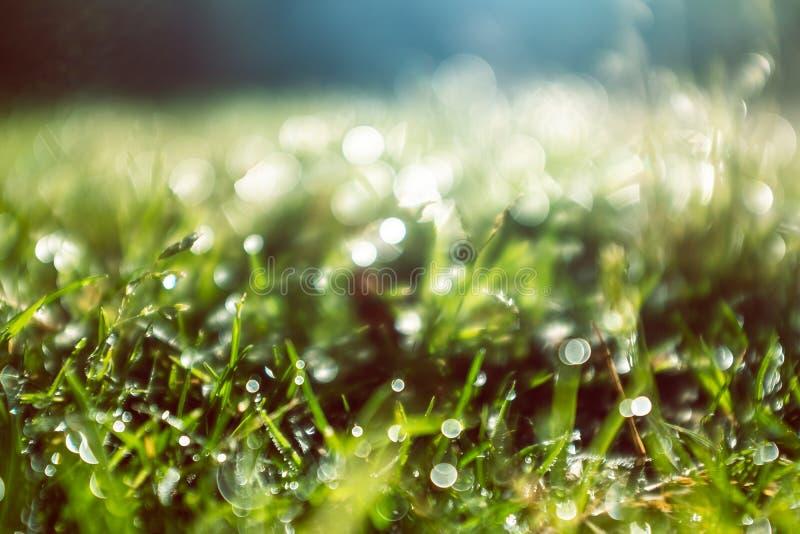 Baisses humides de l'eau de matin sur l'herbe verte photographie stock
