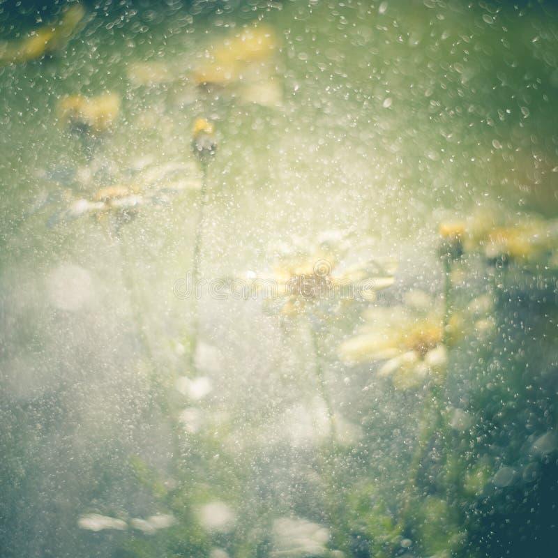 Baisses jaunes de l'eau d'esprit de chrysanthèmes Macro Orientation molle Allez le faire photo libre de droits