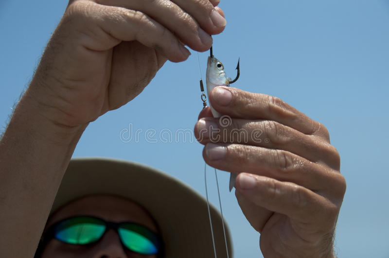 Baiting the hook stock image
