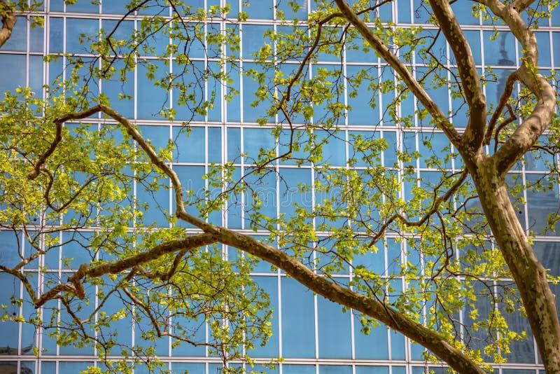 Baixa de New York, Manhattan, primavera Arranha-céus atrás da folha fresca da árvore imagem de stock royalty free