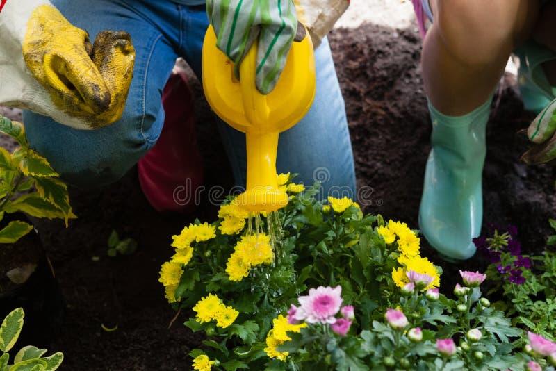 Baixa seção de flores molhando da menina com a lata pela mãe imagens de stock royalty free