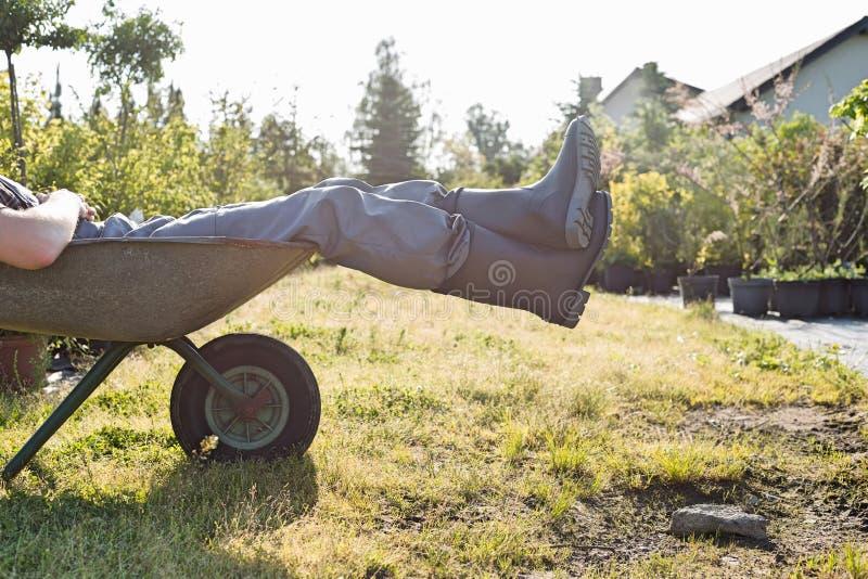 Baixa seção do homem que relaxa no carrinho de mão no jardim imagem de stock