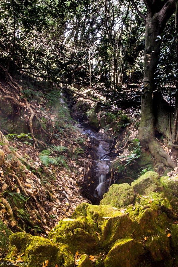 Baja el paseo, Domein, Auckland, Nueva Zelanda imagen de archivo libre de regalías