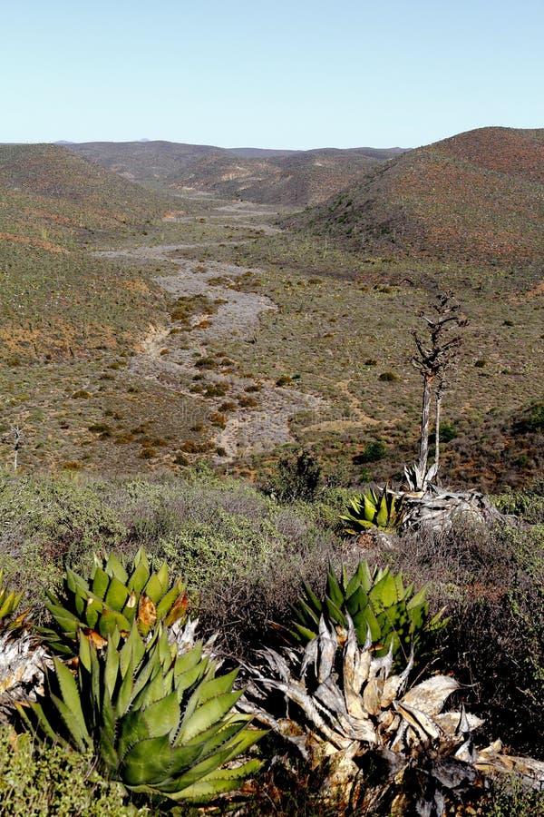 Baja Wüste I lizenzfreie stockfotografie