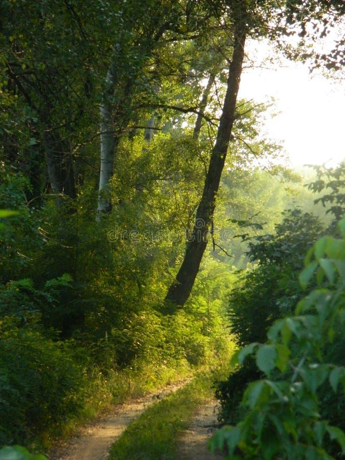 Bajecznie lasowa droga obrazy royalty free