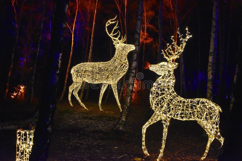 Bajka las z iluminującymi zwierzętami fotografia stock