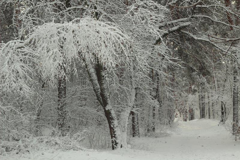 Bajki ścieżka w zima śnieżystym lesie zdjęcia royalty free