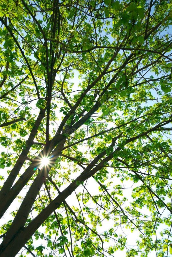 Bajo árbol grande fotografía de archivo libre de regalías