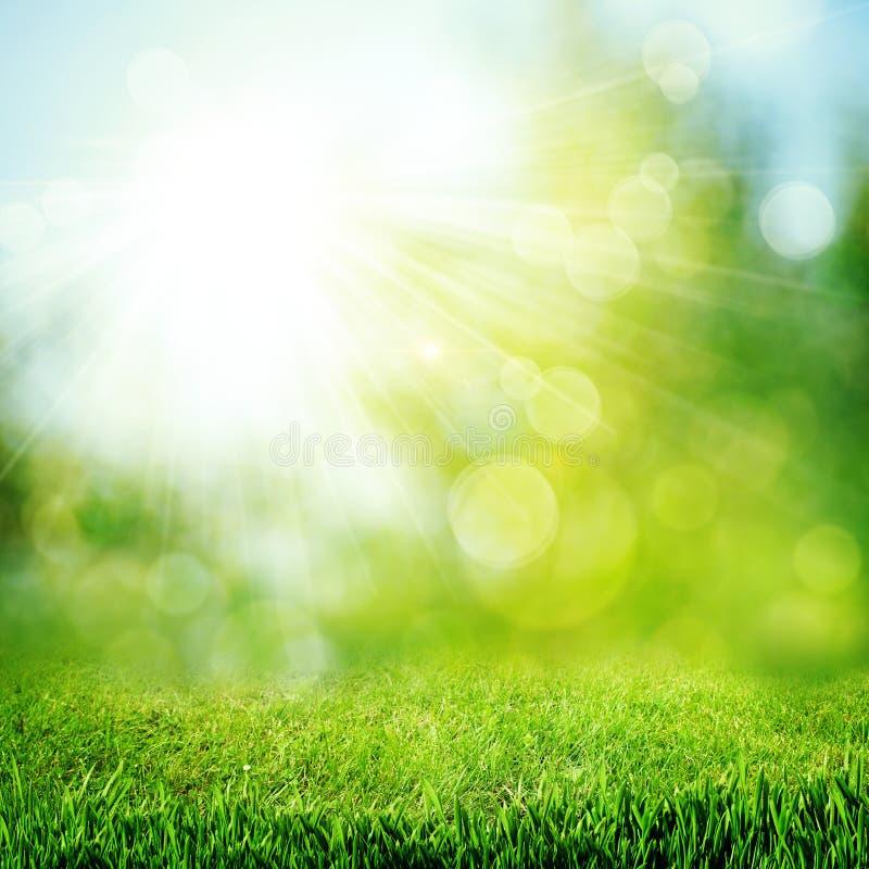 Bajo el sol brillante imagen de archivo libre de regalías