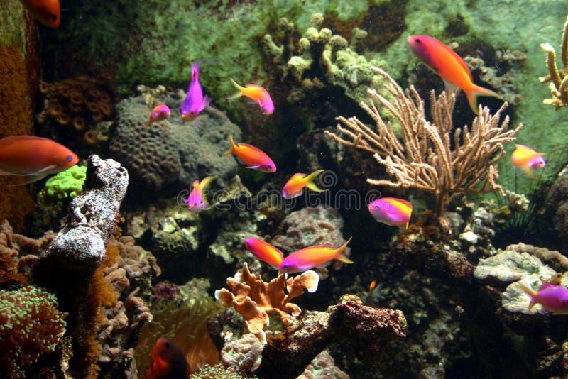 Bajo la superficie del mar fotos de archivo