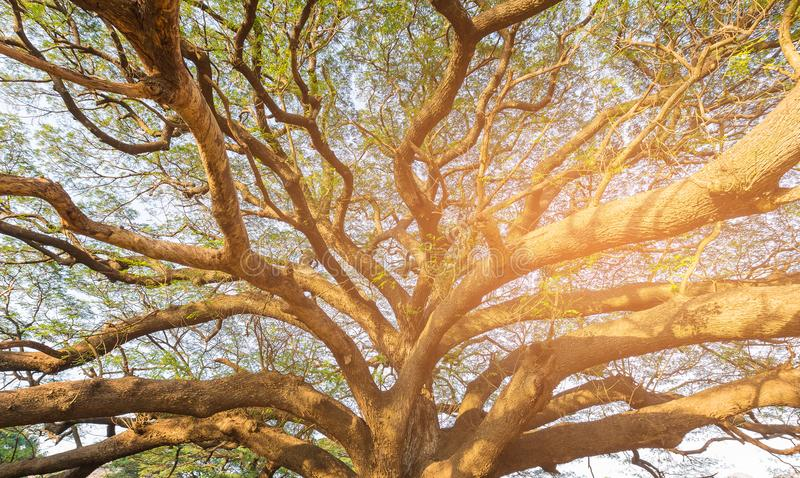 Bajo rama de árbol gigante grande contra luz del sol fotos de archivo