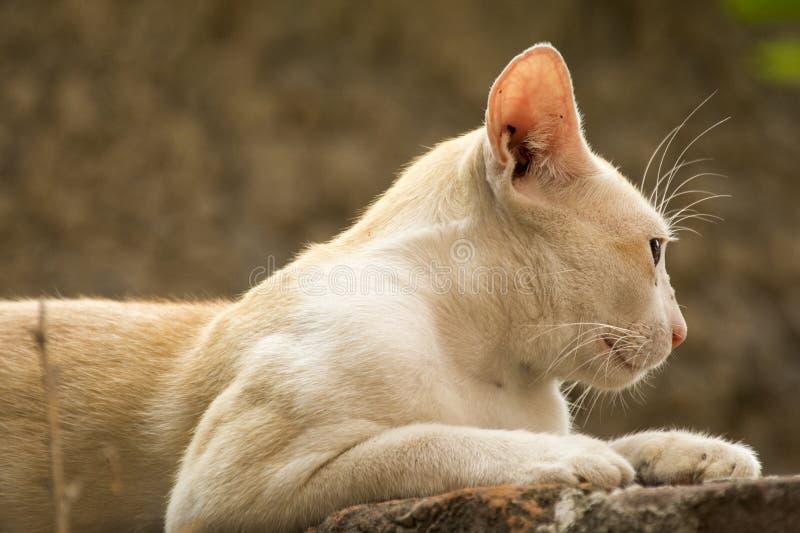 bak att se för katt royaltyfri foto
