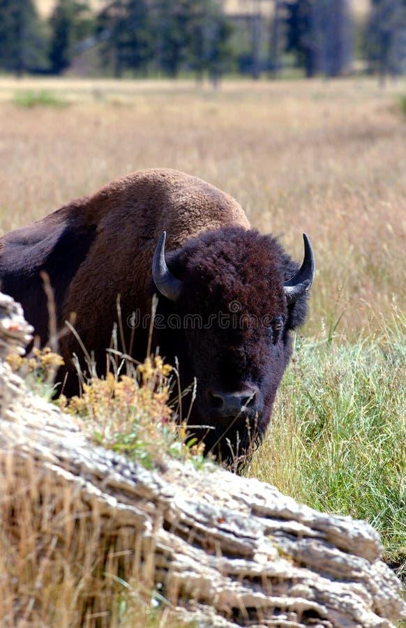 Download Bak bisonrock fotografering för bildbyråer. Bild av fäll - 244043