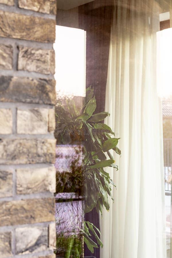 Bak fönstercloseupsikten på växter och tegelstenväggen av en res royaltyfri fotografi