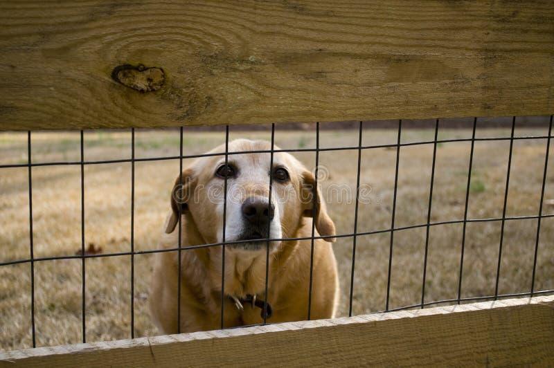 bak hundstaket royaltyfri foto