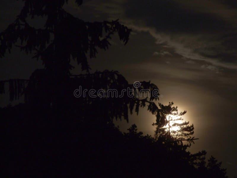 bak moontree royaltyfria foton
