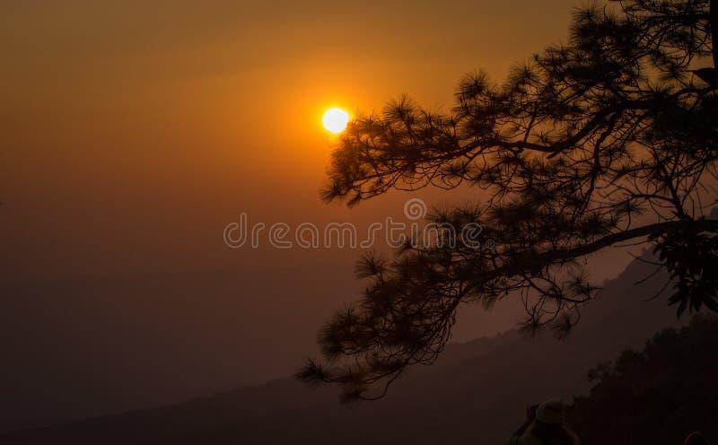 bak solnedgångtree royaltyfri bild