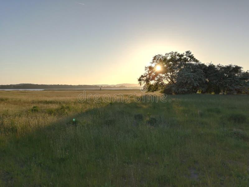 bak solnedgångtree royaltyfri fotografi