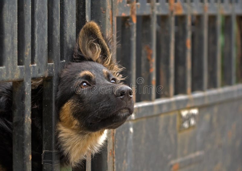 bak staket för svart hund arkivfoto