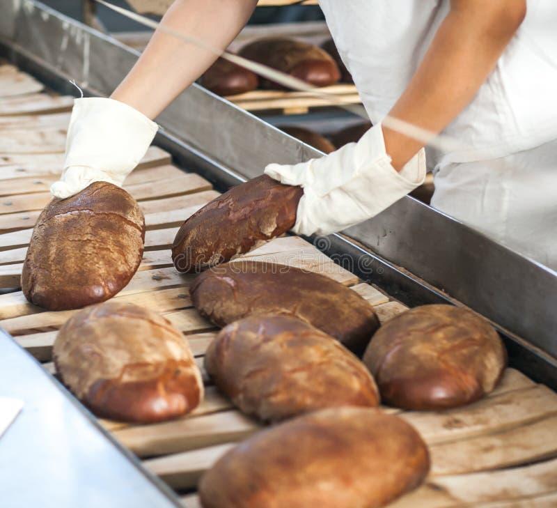 Bakade bröd på produktionslinjen på bagerit royaltyfri foto