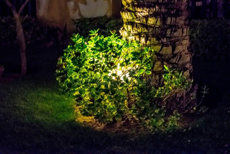Bakbelyst palmträd på natten arkivfoto